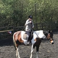 Trainee riding instructor looking to help some lovely riders out with some training programs to help with mainly jumping but other aspects as well xx